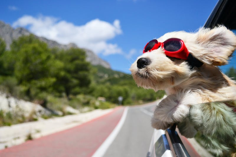 Резултат слика за ways to travel with a dog